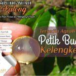 Kampung Buah Cikalong Kavling Agrowisata dan Resort Islami